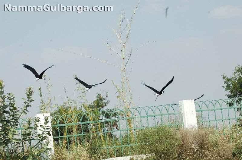 Gulbarga appa garden